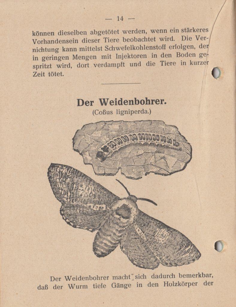 http://holderspritze.de/wp-content/uploads/2018/05/Die-Bekämpfung-der-hauptsächlichen-Schädlinge-und-Krnakheiten_1919-15_1024-788x1024.jpeg