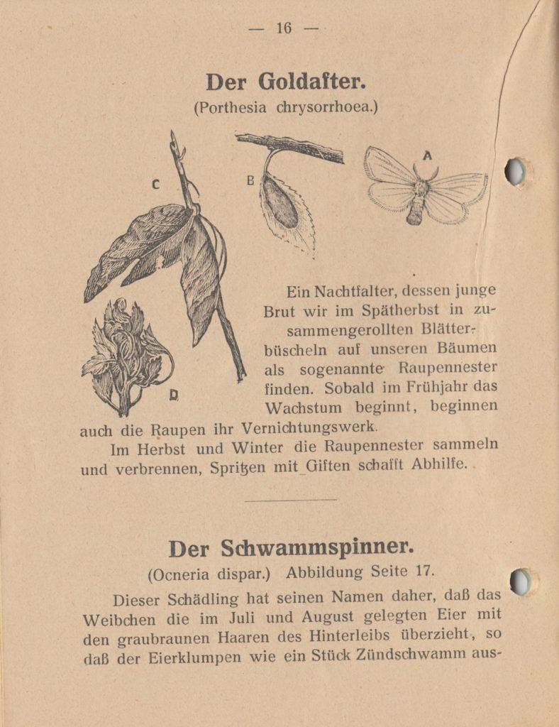 http://holderspritze.de/wp-content/uploads/2018/05/Die-Bekämpfung-der-hauptsächlichen-Schädlinge-und-Krnakheiten_1919-17_1024-788x1024.jpeg