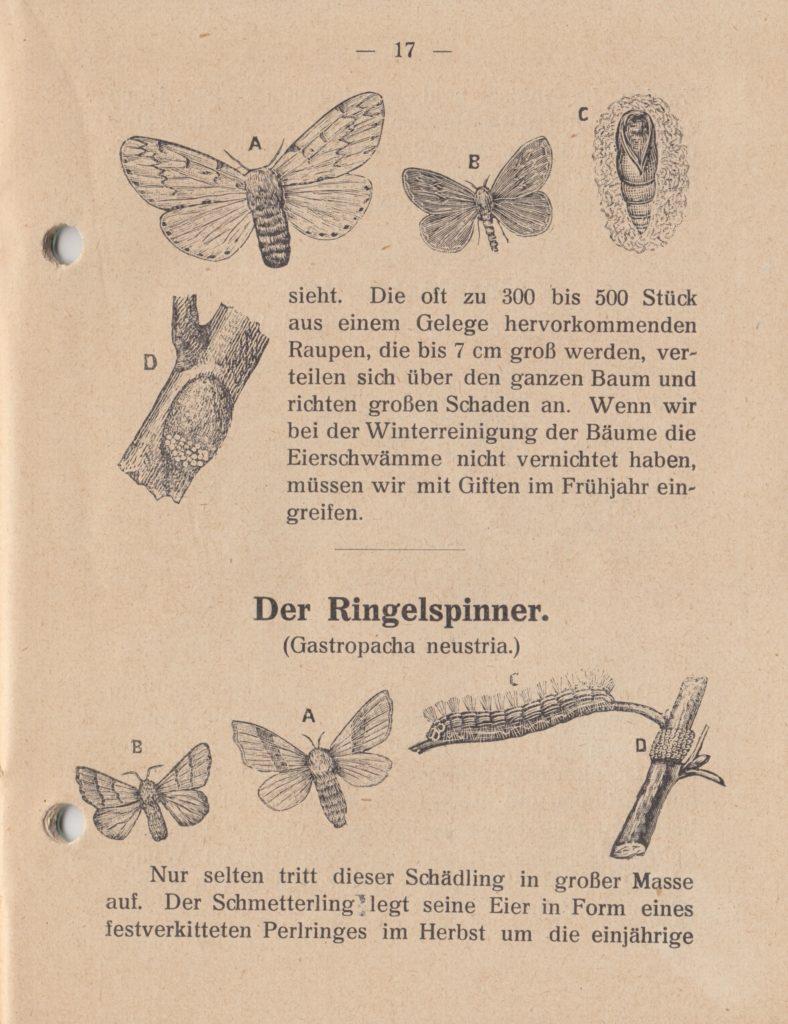 http://holderspritze.de/wp-content/uploads/2018/05/Die-Bekämpfung-der-hauptsächlichen-Schädlinge-und-Krnakheiten_1919-18_1024-788x1024.jpeg