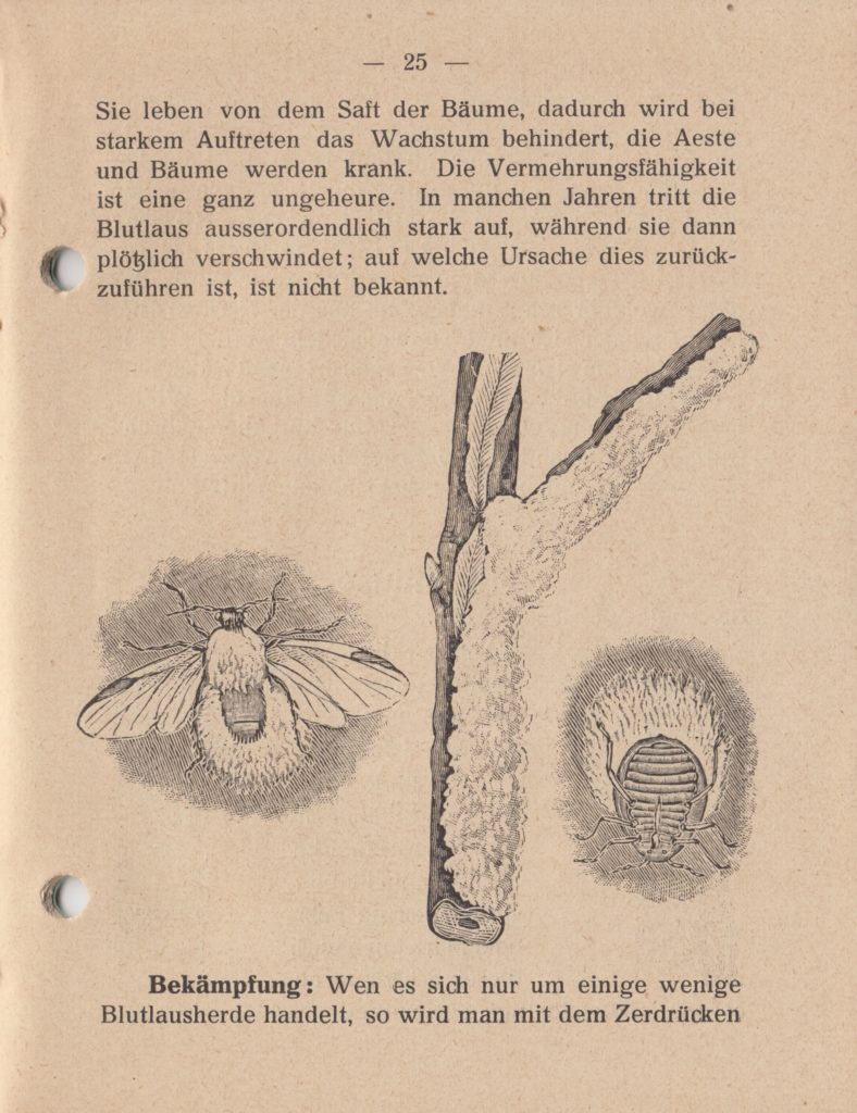 http://holderspritze.de/wp-content/uploads/2018/05/Die-Bekämpfung-der-hauptsächlichen-Schädlinge-und-Krnakheiten_1919-26_1024-788x1024.jpeg